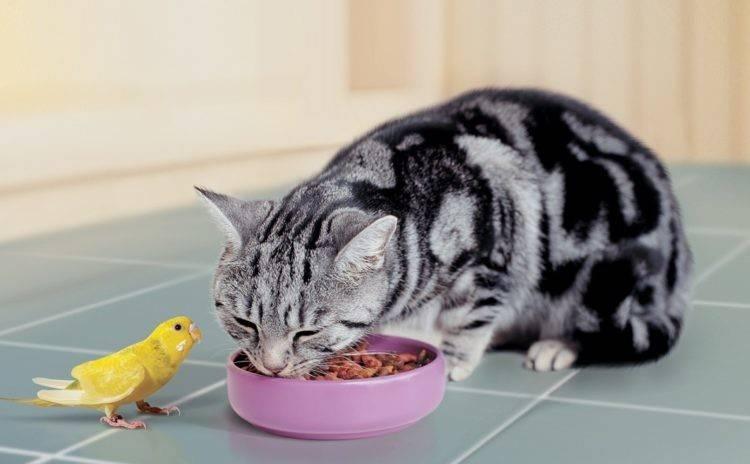 5 способов, как отучить кота или кошку от корма и приучить к домашней еде: как приучить к нормальной еде