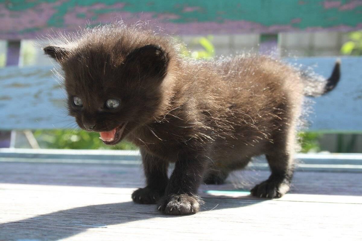 Почему котенок стал агрессивным?
