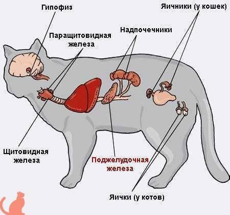 Кошка резко выдыхает. кот тяжело дышит: в чем причина и что делать