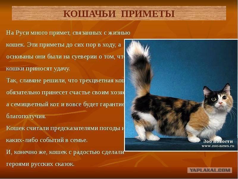 Какие народные приметы связаны с уходом кошки или кота из дома, как вернуть какие народные приметы связаны с уходом кошки или кота из дома, как вернуть