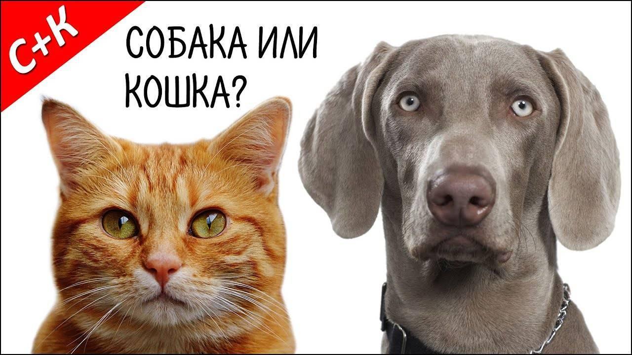 Светлана лукьянова / сравниваем кошачий и собачий интеллект: кто умнее.: за права животных newsland – комментарии, дискуссии и обсуждения новости.