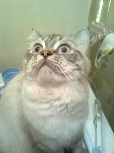 Почему кот смотрит в одну точку - oozoo.ru