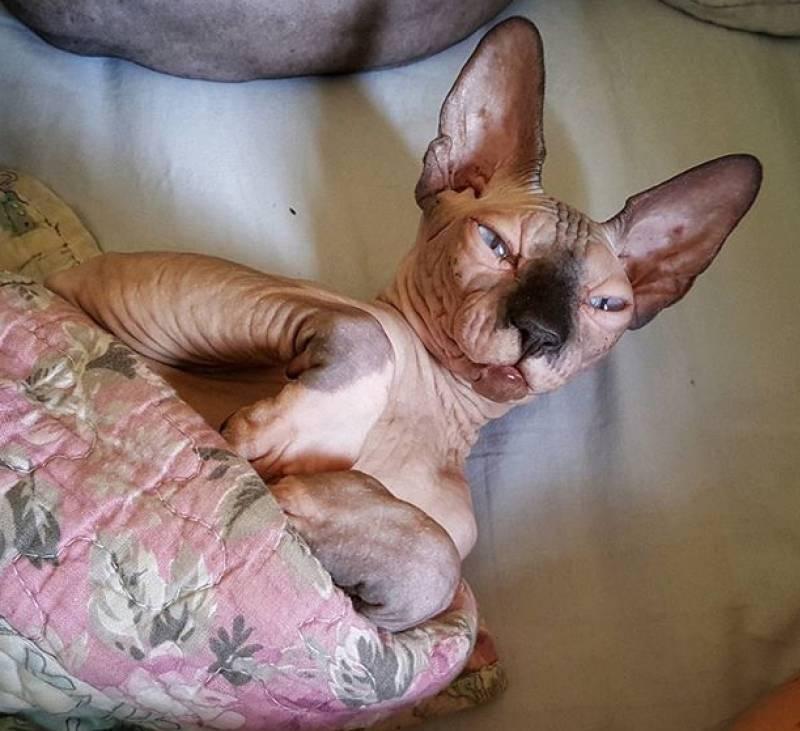 Температура тела у кошек:  норма и отклонения