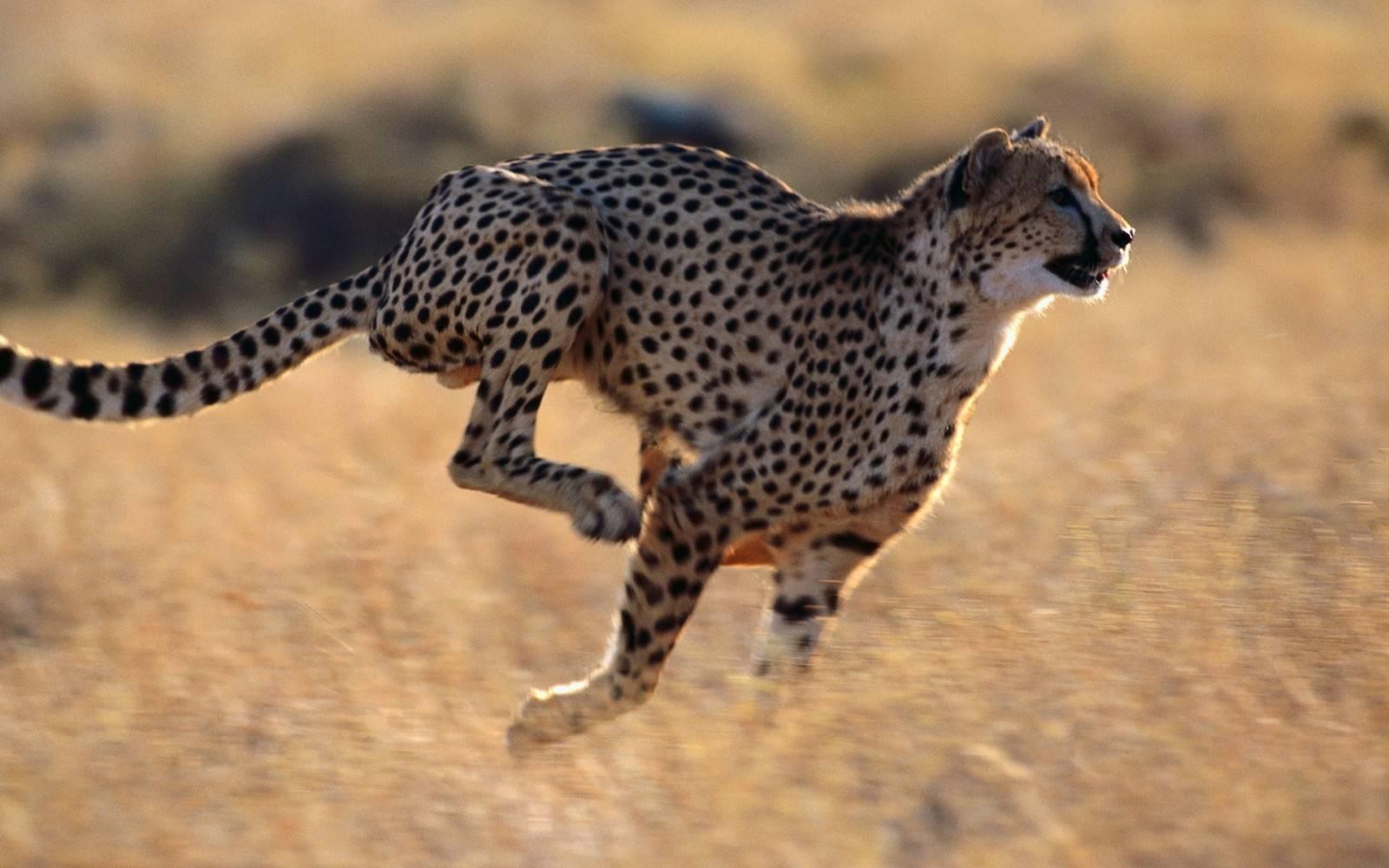 10 самых быстрых представителей животного мира :: инфониак