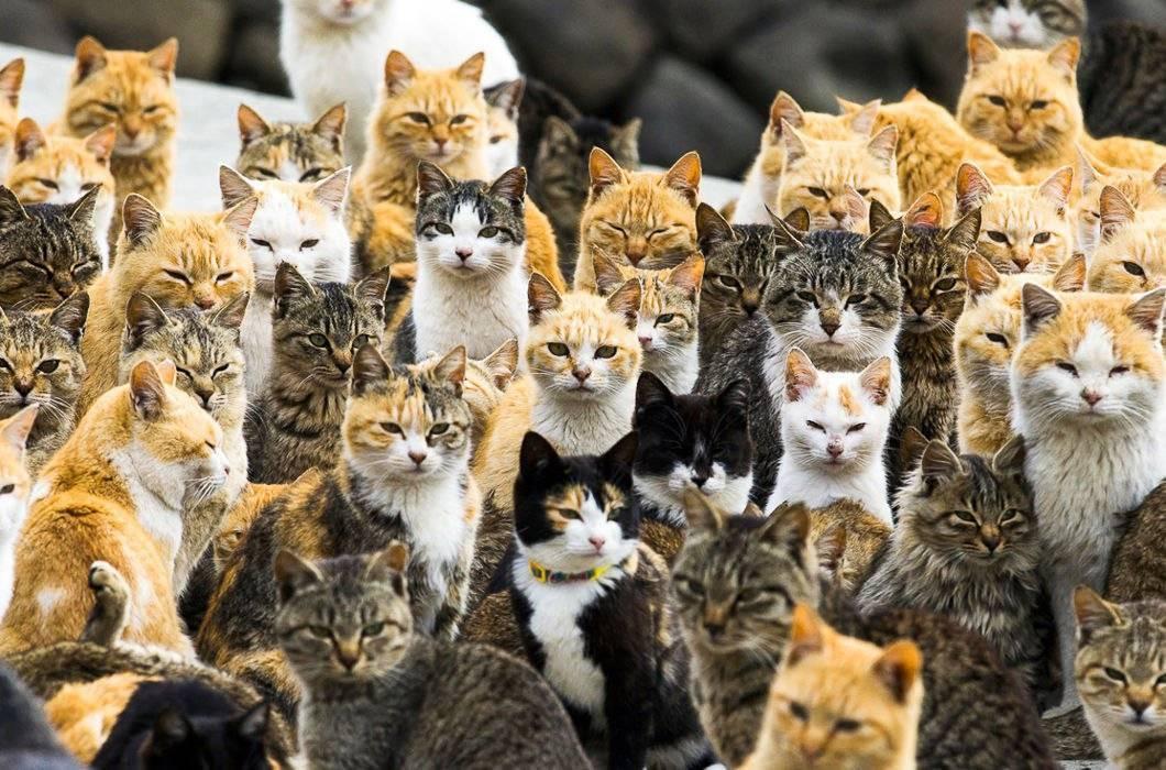 Сколько кошек в мире и в россии, где на земле проживает больше всего котов?