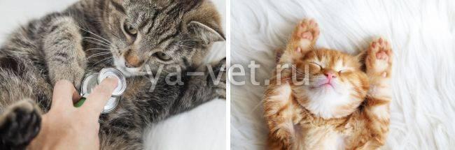 Полидипсия у кошек симптомы и лечение причины