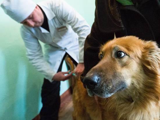 Первые прививки щенку от а до я: возраст, правила «до и после», стоимость