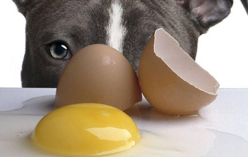 Сырой желток котенку. можно ли кошкам яйца? правила кормления котёнка - меднаука