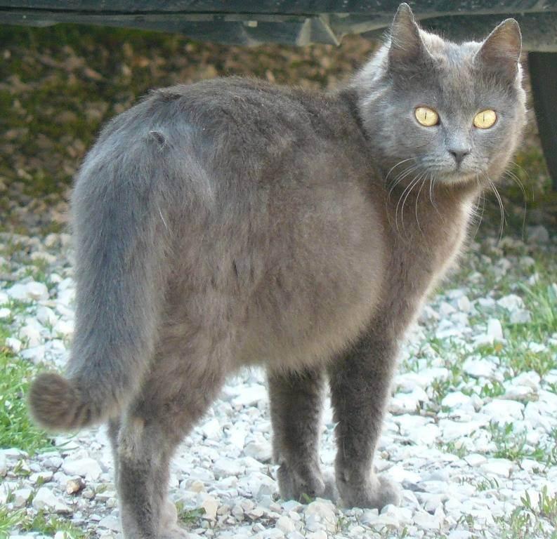 Беременность кошки: признаки, рекомендации ветврачей | ветеринарная служба владимирской области