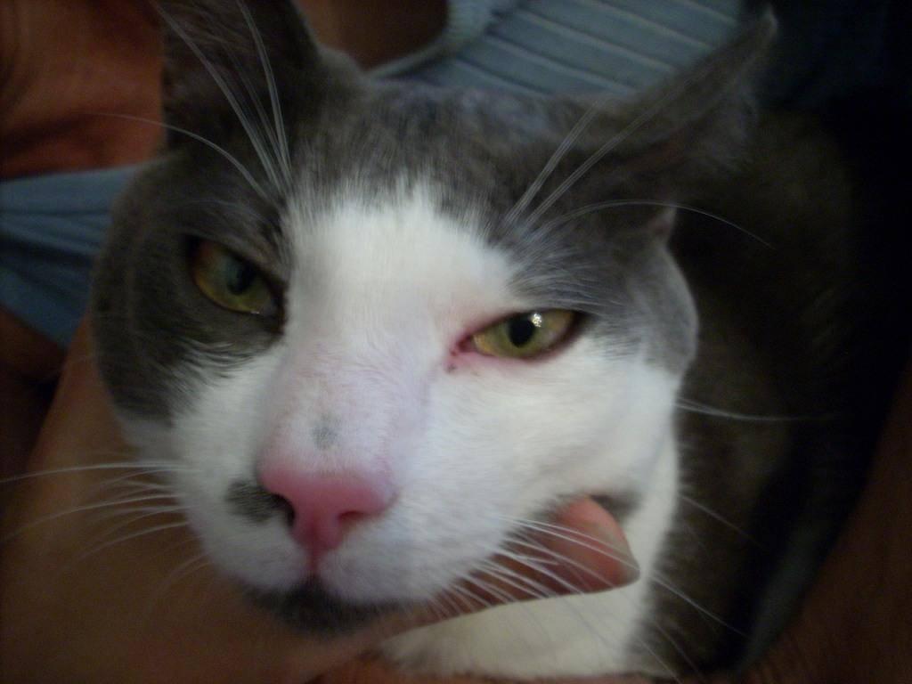 У кошки или кота коричневые выделения из глаз: причины и лечение темной жидкости