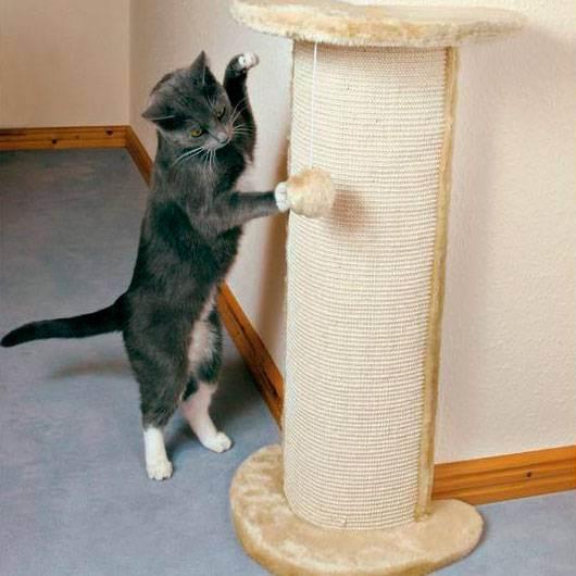 Когтеточка для кота — советы как выбрать когтедралки, специальные домики и места для кошек (115 фото)