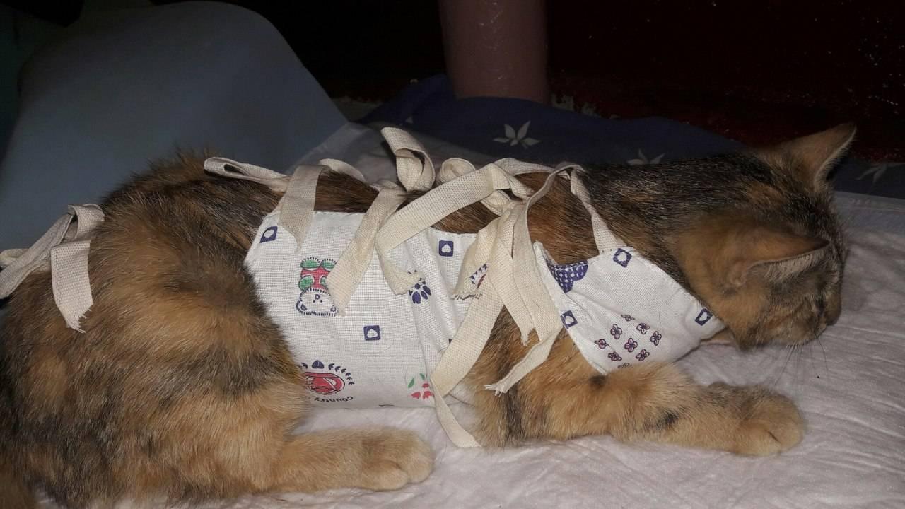 Почему кошка после стерилизации много спит и вялая?