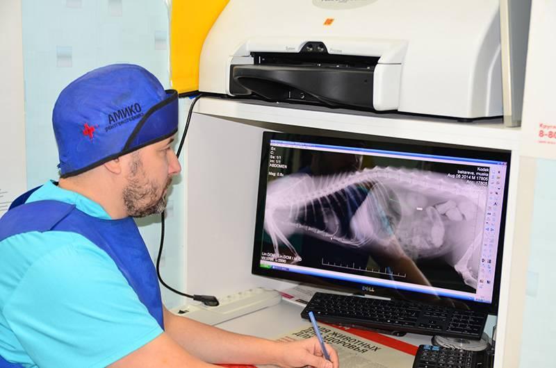 Рентген для животных – сделать рентген собаке или кошке в москве
