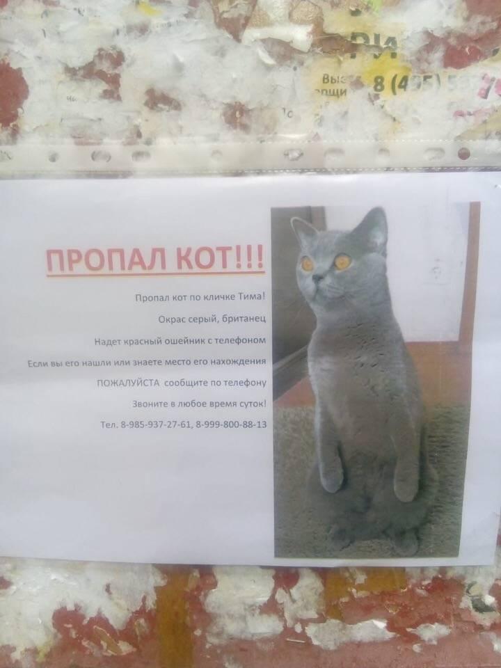 По какой причине уходят из дома кошки?