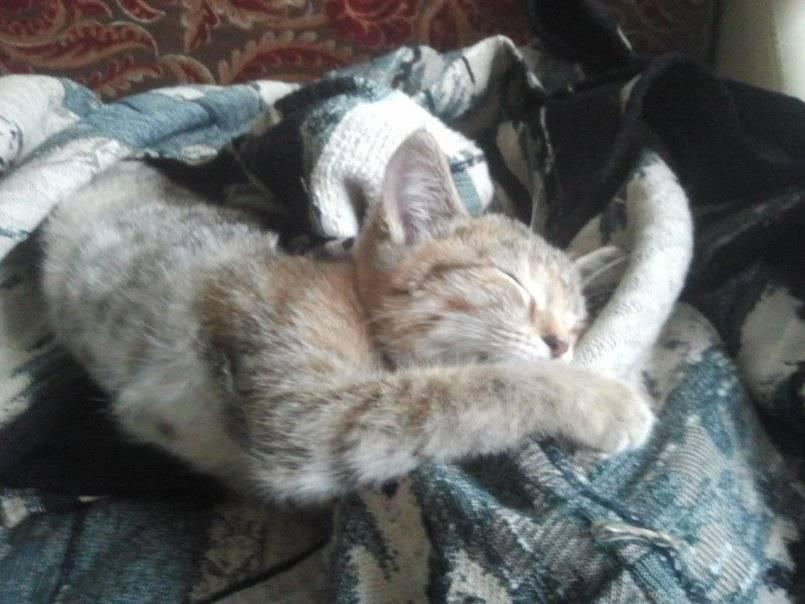 Рахит у котов и кошек - симптомы, лечение, препараты, причины появления | наши лучшие друзья