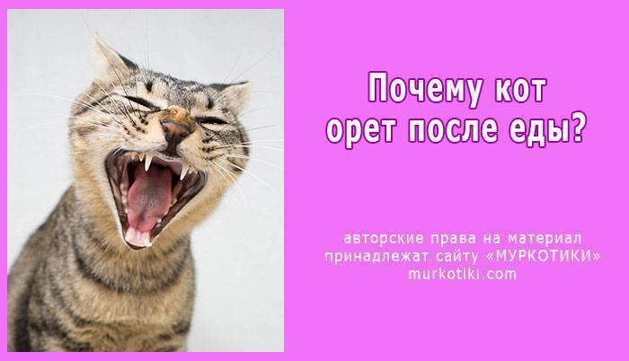 Причины и способы успокоения кота, особенности поведения или признак болезни