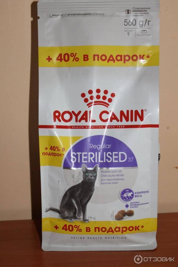 Чем кормить кошку при аллергии: советы и рекомендации специалистов