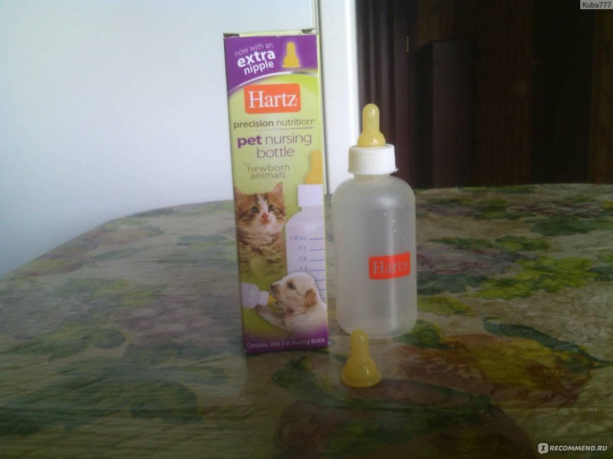 Как и чем кормить новорожденных котят, если у кошки нет молока?