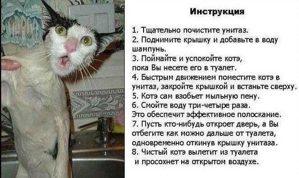 Как помыть кота - инструкции как правильно быстро и просто помыть домашнее животное