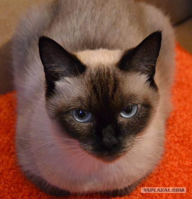 Как назвать кошку? подборка имён