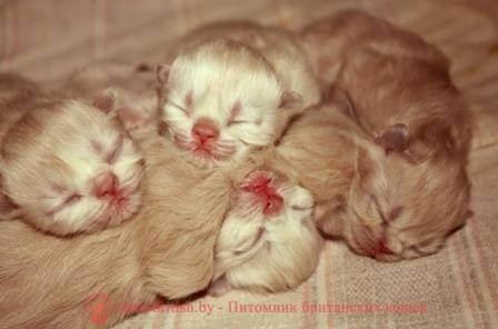 Как выкормить, вырастить и ухаживать за новорожденным котенком?
