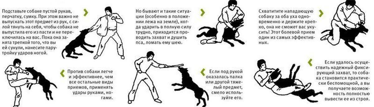 Способы успокоить загулявшую кошку