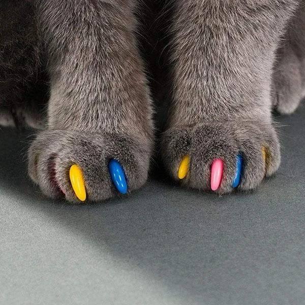 Антицарапки для кошек: как выглядят, как надеть на когти и снять, каковы польза и вред?