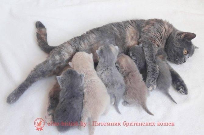 Зрение котят, когда они открывают глаза