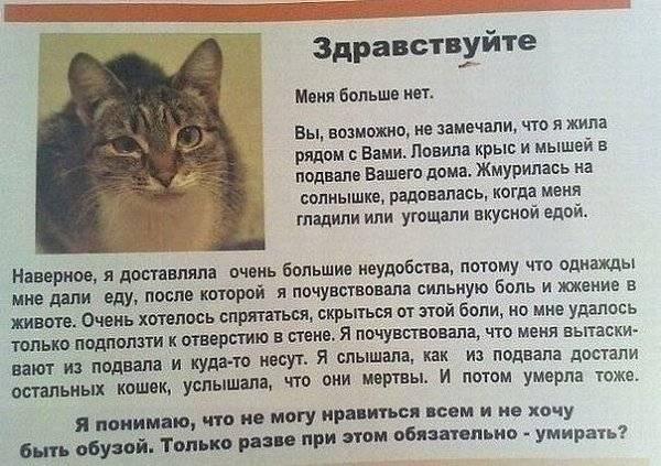 Как умирают кошки: 5 признаков скорой смерти