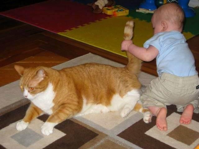 Здоровая кошка - здоровая семья