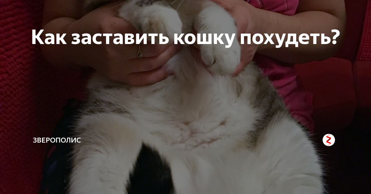 Как заставить похудеть толстую кошку?