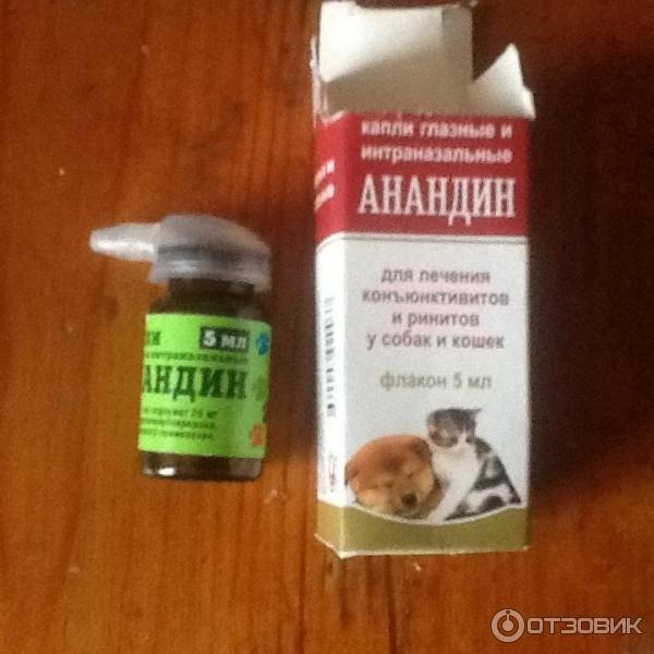 Как лечить насморк у кошки в домашних условиях. как вылечить котенка от насморка чем промыть нос коту в домашних условиях