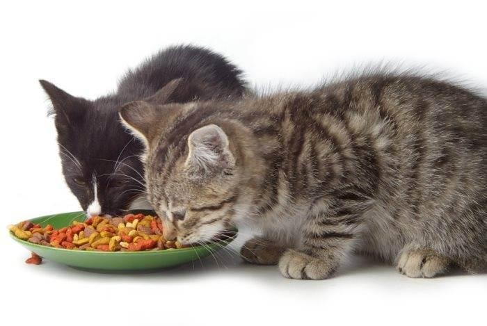 Как правильно кормить кошку: чем лучше, что дать в домашних условиях как правильно кормить кошку: чем лучше, что дать в домашних условиях