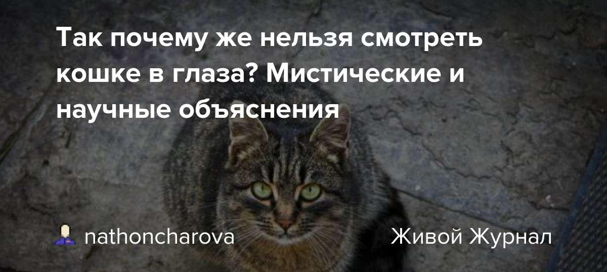 Почему нельзя смотреть кошке в глаза почему нельзя смотреть кошке в глаза