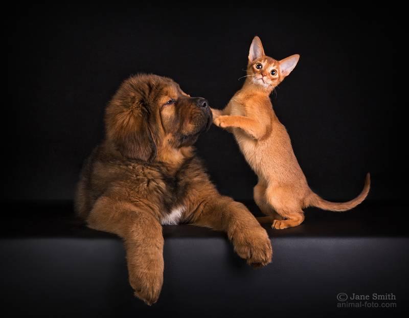 Как подружить собаку с кошкой в квартире — разбираем все ситуации ⋆ собакапедия