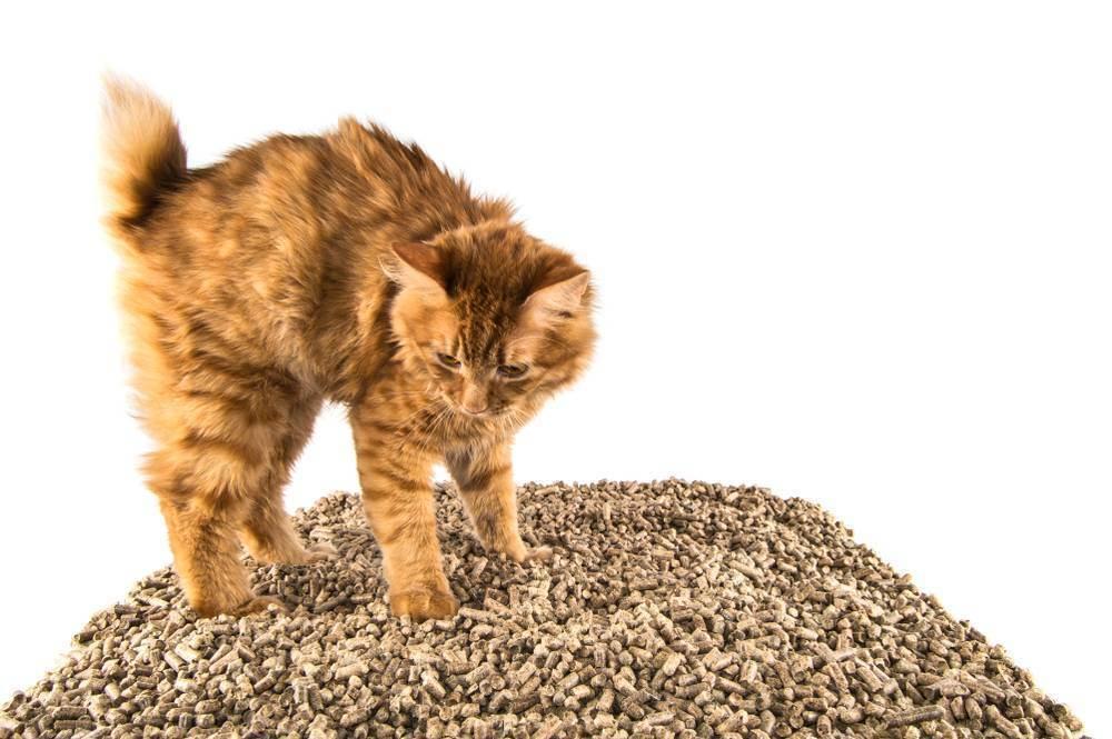 Как выбрать наполнитель для кошачьего туалета, какой лучше, рейтинг, отзывы