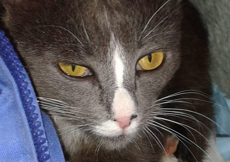 Лечение третьего века у кошки в домашних условиях
