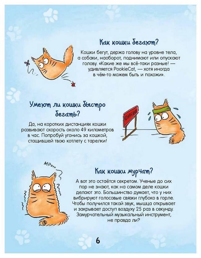 Почему кот мурчит с приоткрытым ртом - кошки и собаки простыми словами