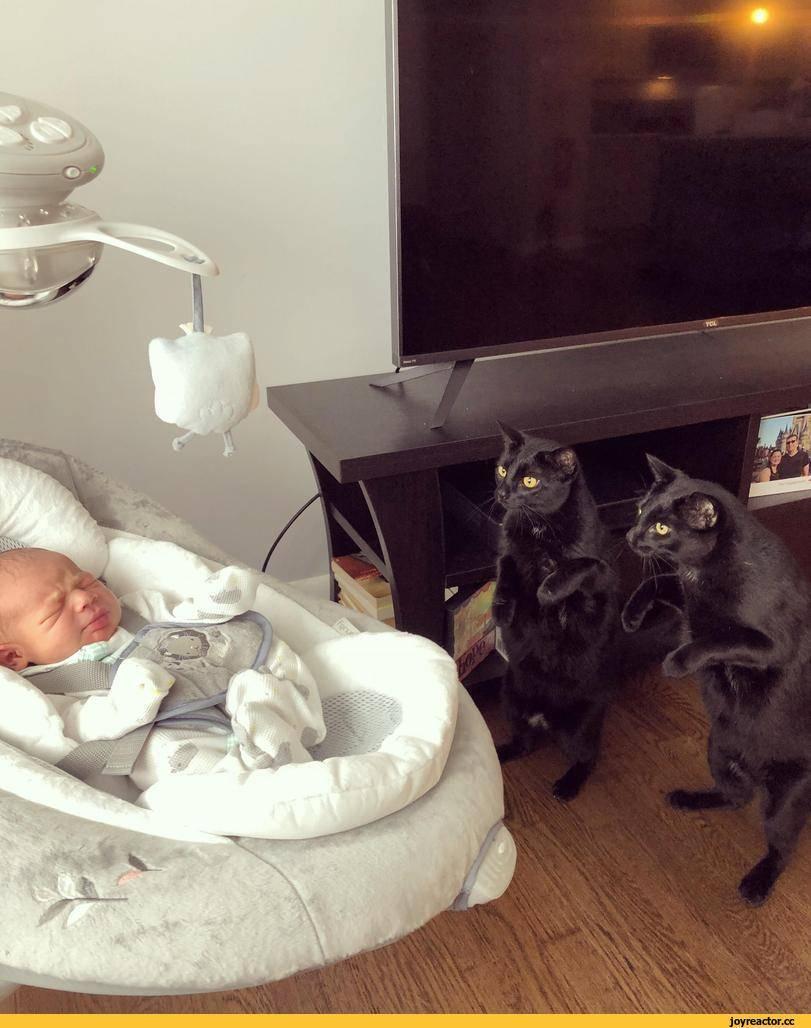 Кот задушил ребенка - новорожденный и кот в доме, доктор комаровский советы