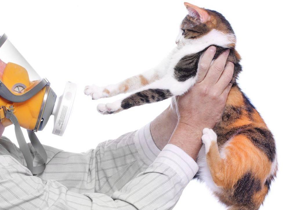 Аллергия на кошку у взрослых: симптомы, причины, лечение лекарственными препаратами