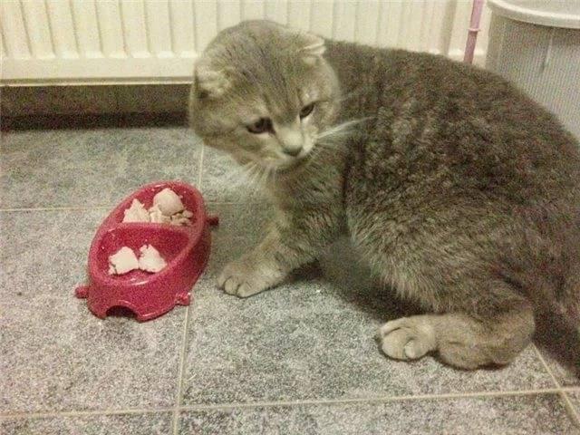 Остеохондродисплазия кошек: приговор или нет. остеохондродисплазия у кошек: причины, симптомы, лечение - меднаука