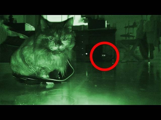 Почему считается, что кошки и коты видят призраков — правда ли это; как видит кошка и что делать, если она увидела призрака; смотрим видео: кошки увидели призрака