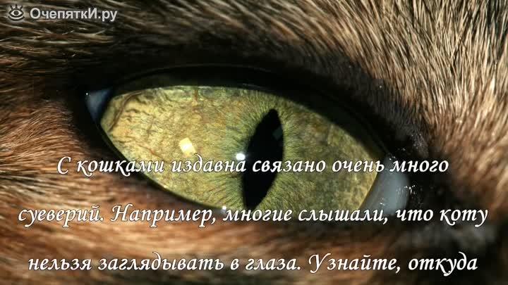 Почему нельзя смотреть кошке в глаза: приметы, мифы и суеверия