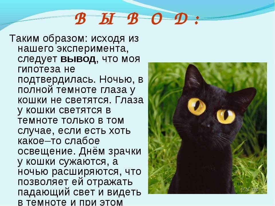 ᐉ почему у кошек светятся глаза в темноте? - ➡ motildazoo.ru