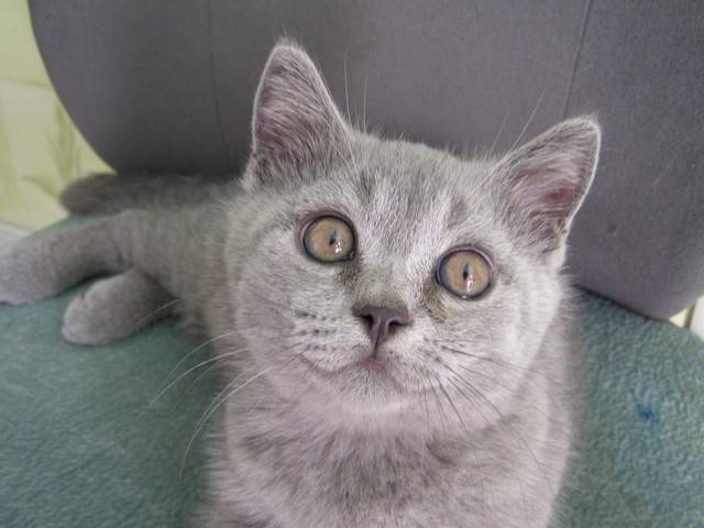 Когда у котят меняется цвет глаз с голубого на другой, почему это происходит и в каком возрасте?