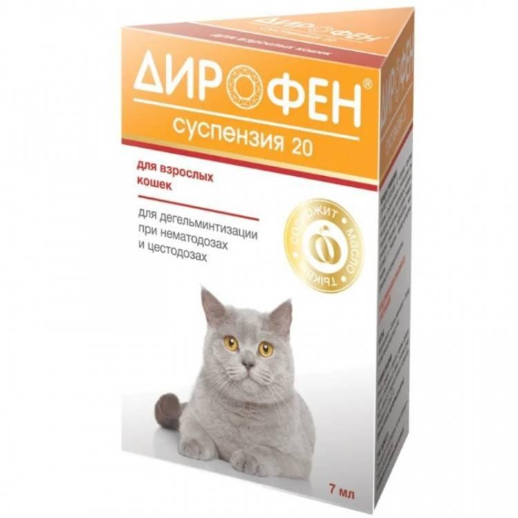 Как подбирается суспензия от глистов для котят?
