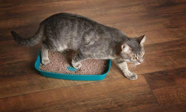 Лабораторные методы диагностики у кошек при гипертиреозе