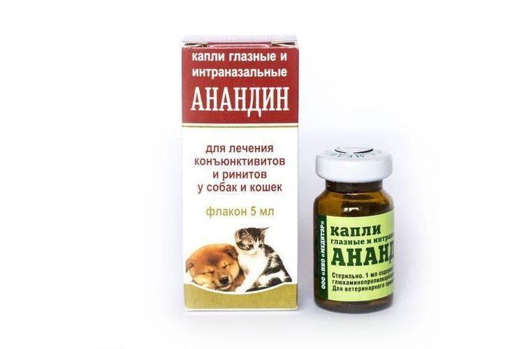 Препарат максидин для кошек