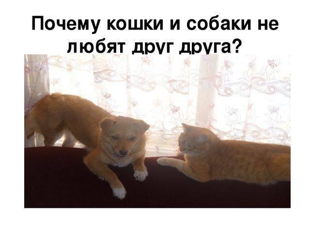 Почему собаки не любят кошек   «зачем и почему»