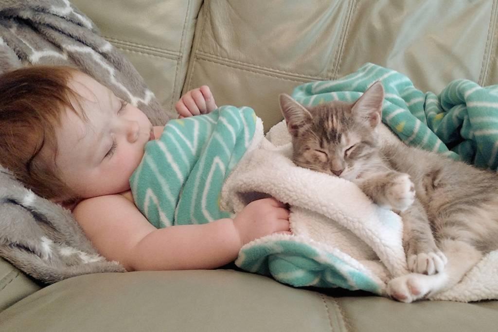 Кошки и маленькие дети: ответы на вопросы (faq) ~ коточек